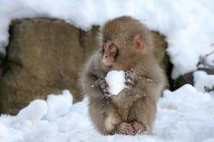 """ This fluffy monkey preparing a vicious sneak attack. "" http://ift.tt/2dHv7ke"