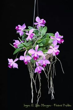 orchids by hausermann inc Flowers Nature, Exotic Flowers, Beautiful Flowers, Orchids Garden, Orchid Plants, Phalaenopsis Orchid Care, Pink Orchids, Orchid Roots, Orchid Varieties