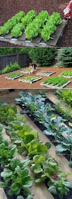 Reuse wooden pallets and make a cute little green garden