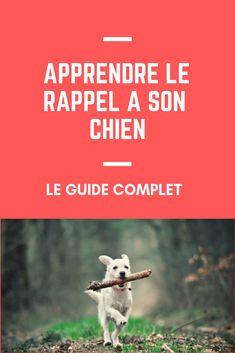 Education Canine, Cesar Millan, Basset Hound, Cavalier King Charles, Goldendoodle, Cat Life, Border Collie, Cat Day, Dog Training