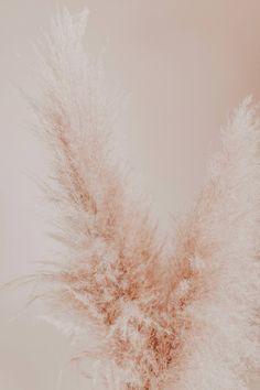 Deko-Trend Trockenblumen: die schönsten Blumen und Sträuße