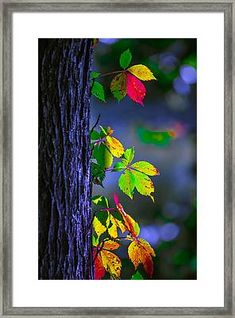 Luminous Leaves Framed Print by Brian Stevens arka plan Luminous Leaves by Brian Stevens Blur Image Background, Studio Background Images, Black Background Images, Photo Background Images, Background Images Wallpapers, Picsart Background, Photo Backgrounds, Creative Background, Beautiful Flowers Wallpapers