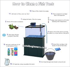 how-to-clean-fish-tank