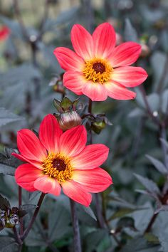 How to Plant Potted Flowers Outdoors in the Soil : Garden Space – Top Soop Flowers Nature, Exotic Flowers, Tropical Flowers, Amazing Flowers, Beautiful Flowers, Nature Photography Flowers, Lilies Flowers, Purple Flowers, Dahlia Flower