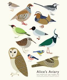 "Poster illustration by Alice Melvin, ""Alice's Aviary"", Edinburgh, Scotland. Bird Illustration, Illustrations, Bird House Kits, Art Graphique, Grafik Design, Bird Art, Bird Feathers, Beautiful Birds, Pet Birds"