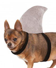 DC Comics™ Batman Pet Costume | Pinterest | Pet costumes Pet products and Dog  sc 1 st  Pinterest & DC Comics™ Batman Pet Costume | Pinterest | Pet costumes Pet ...