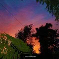 Purple Sunsets with Green Leaves by Jeronimo Rubio Photorgraphy 2016