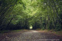 Camino por el bosque. Pirineos