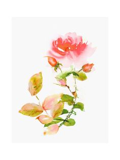 """Rose"" by V E R Y M A R T A in beautiful frame options and a variety of sizes."
