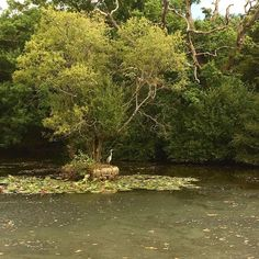 Happy #WorldEnvironmentDay ! we are incredibly lucky here at Cranleigh to be surrounded by beautiful nature and wildlife. Here is our resident Heron, spotted at Gatley's Pond last summer 🌾