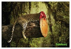 Now this is one way to convey an important message. Creative director Ganesh Prasad Acharya and copywriter Kaushik Katty Roy have just created a series of shocking concept print ads for Sanctuary India that show how habitat destruction affects wildlife. Social Advertising, Creative Advertising, Advertising Campaign, Advertising Design, Ads Creative, Advertising Ideas, Campaign Posters, Advertising Poster, Ganesh