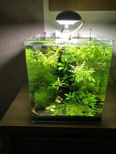 Fish Tank Terrarium, Aquarium Terrarium, Tropical Fish Aquarium, Tropical Fish Tanks, Nano Aquarium, Betta Fish Tank, Aquarium Ideas, Aquarium Design, Aquarium Fish Tank