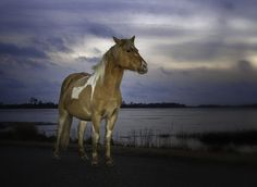 Chincoteague Island, VA. Oh my god, this takes me back to my childhood. This place is like a second home!!!!