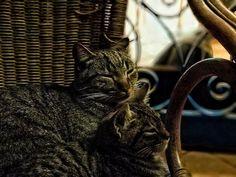 [:en]Cutest Cat Ever![:] - kitty #catlover #cat #kitty #kitten #猫