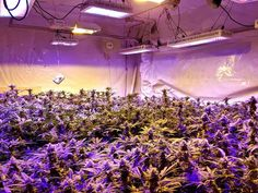 are you still use the hps for plants growing? Believe it, the LEDs bring you the higher value . online:www.ecospeedled.com email:ava@ecospeedled.com thanks
