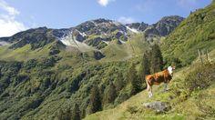 Urlaub in Wildschönau Österreich Vacation