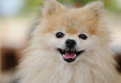 """Điểm danh 10 chú cún """"hot"""" nhất thế giới mạng - http://chocanh.biz/diem-danh-10-chu-cun-hot-nhat-the-gioi-mang/"""