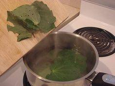 Preparing kawakawa