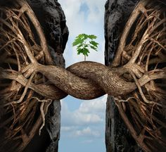 bridging the gap: Unity growth concept and bridge the gap business symbol as two tree roots on a high steep cliff connecting and merging together bridging together to form a new sapling as an icon of partnership success and strength.