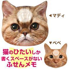 狭い!猫の ふせんメモ !にゃん!。猫のひたい 付箋メモ ふせん マディ/ペペ 【猫 グッズ 文房具 ねこのふせん】