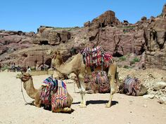 These camels on the Outer Siq at Petra, Jordan, are waiting to be hired by tourists.