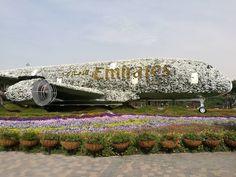 #Dubai #emirates #miraclegarden #garden #flowers Miracle Garden, Dubai, Instagram Posts, Flowers, Royal Icing Flowers, Flower, Florals, Floral, Blossoms