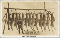 NW Emmet County Carp Lake MI RPPC 1940 Deer Hunters Dream Racks on Buck Pole Rifles Hanging Photographer Unknown Postmarked 251 Hunting Signs, Deer Hunting, Hunting Art, Sport Fishing, Fly Fishing, Fishing Trips, F Pictures, Photos, Deer Camp