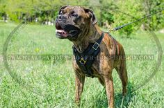 Exquisite Handcrafted #Boxer #Dog #Harness for Successful #Training $79.90