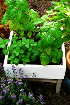 Great idea!  Turn old drawer into herb garden.  If the drawer is big enough...maybe veggies?