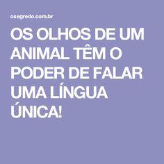 OS OLHOS DE UM ANIMAL TÊM O PODER DE FALAR UMA LÍNGUA ÚNICA!