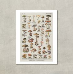Pilze Champignons französischen botanischen von TwoDovesPrinting