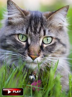 #CuteCatsKittensVideo Funny cats Videos Vines 2016 Cute kittens doing funny thing video pictures  More cute kittens   HERE http://www.youtube.com/user/TheFederic777?sub_confirmation=1