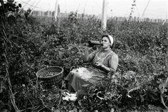 TÖRTÉNELMI KALEIDOSZKÓP...: A SZÜRETRŐL / Többi képért katt a posztra ! Hungary, History, Couple Photos, Retro, Brewery, Wine, Couple Shots, Historia, Couple Photography