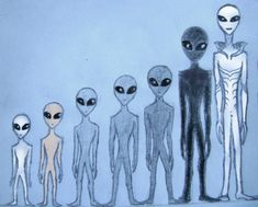 grey aliens type and rating sketch by Calivander on DeviantArt Aliens Und Ufos, Ancient Aliens, Dragons, Lotus Flower Art, Project Blue Book, Grey Alien, Recycled Art Projects, Alien Queen, Alien Concept Art