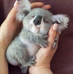 "Sweet baby koala dreams By via 🐨 What would YOU name him? Sweet baby koala dreams 🌙 ✨ By ""pinner"": {""username"": ""pictureforyouwebsite"", ""first_name"": ""Picture For You"", ""domain_url"":. Cute Little Animals, Cute Little Baby, Cute Funny Animals, Little Babies, Tiny Baby Animals, Baby Animals Super Cute, Funny Koala, Smiling Animals, Baby Pandas"