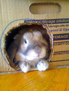 Cardboard boxes are a great source of enjoyment for bunnies.  They like to make little windows and peep out.