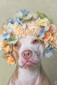 Pit Bulls In Flower Crowns Result In A Seriously Heart-Tugging Photo Series