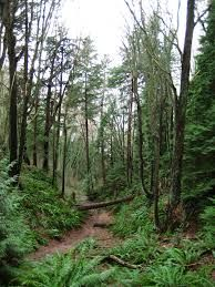Image result for vancouver forest