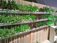 Rain gutter gardening on fence
