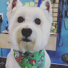 Charlie #wagsmytail #tucsondoggrooming #doggroomer A well groomed dog is a well loved dog! Call us today to schedule your dog grooming appointment 520-744-7040