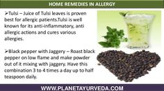 Herbal remedies for allergy with ayurvedic treatment Ayurvedic Home Remedies, Herbal Remedies, Allergy Remedies, Roasted Peppers, Herbalism, The Cure, Health Fitness, Herbs, Allergies