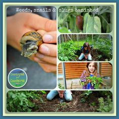 Weeds, snails and slugs banished as our greenhouse grows with  #CountryKids http://www.coombemill.com/blog/post/2013/06/28/Country-Kids-from-Coombe-Mill.aspx