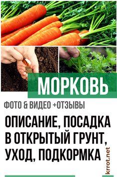 Modern Farmhouse Exterior, Garden Plants, Carrots, Vegetables, Gardening, Sodas, Lawn And Garden, Contemporary Farmhouse Exterior, Carrot