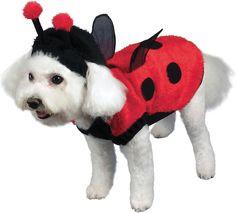 Disfraz para perro - catarina