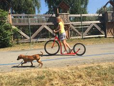 #Kolobezky pre psov Kostka   Orieskiada Košice 2015 Outdoor, Outdoors, Outdoor Games, The Great Outdoors