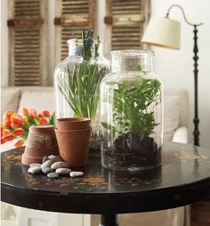 An Easy Take on Terrariums: from H&H may 2010 issue - photo angus fergusson  see blog