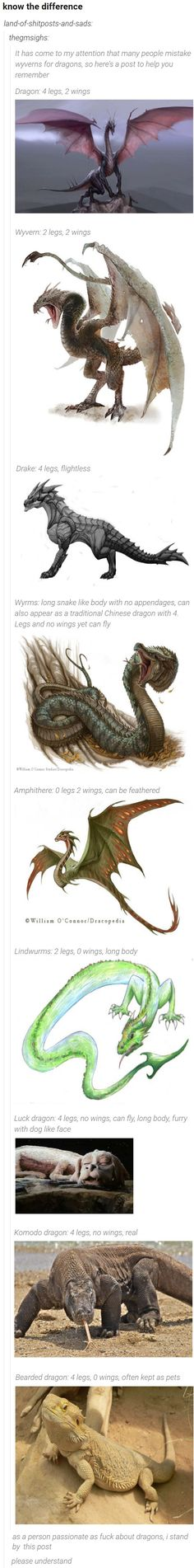Dragon: 4 legs, 2 wings.Wyvern: 2 legs, 2 wings.Drake: 4 legs, flightless.Wyrms: long snake like body with no appendages, can also appear as a traditional Chinese dragon with 4. Legs and no wings yet can fly.Amphithere: 0 legs 2 wings, can be feathered.Lindwurms: 2 legs, 0 wings, long body.Luck dragon: 4 legs, no wings, can fly, long body, furry with dog like face.Komodo dragon: 4 legs, no wings, real.Bearded dragon: 4 legs, 0 wings, often kept as pets