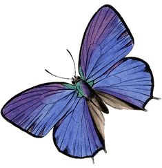 Full-Color Decorative Butterfly Illustrations CD-ROM and Book