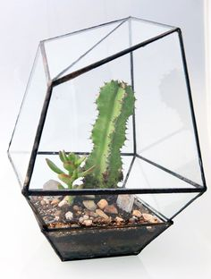 Geometric terrarium by Assembly New York.