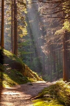 Sunlight in the forest (Czech Republic) by skoeber cr.You can find Nature pictures and more on our website. Sunlight in the forest (Czech Republic) by skoeber cr. Forest Photography, Landscape Photography, Travel Photography, Scenery Photography, Photography Classes, Photography Camera, Fashion Photography, Ocean Photography, Aerial Photography